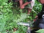 Putting Beliung Muncang_0041