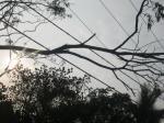 Penyulang Sabagi, Pohon tumbang